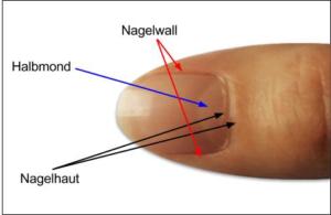 Nagelhaut, Nagelhautpflege, Nagelwall
